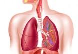 Importance de la respiration en course à pied