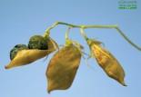Lentilles : le légume idéal pour l'endurance ?