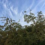 doux-matin-automne