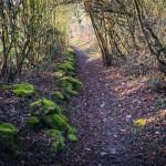 terrain-trail-test-chaussures-3