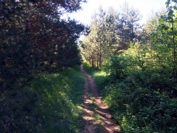 photo-trail