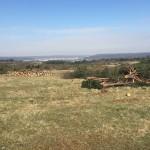 plateau-malzeville-foret-amazonienne-5