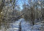 Un coin de ciel bleu en hiver